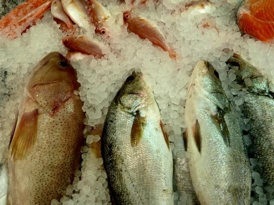 Vispopulaties worden enorm overbevist en zijn sinds 1950 met ruim 80% verdwenen.